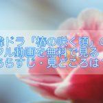 韓ドラ「椿の花咲く頃」のフル動画を無料で見る!あらすじ・見どころ